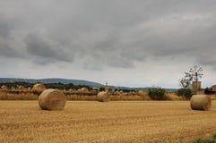 Giacimento di grano falciato Fotografia Stock