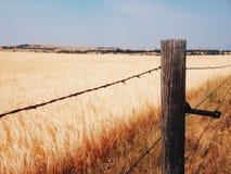 Giacimento di grano giallo Fotografie Stock Libere da Diritti