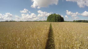 Giacimento di grano il giorno nuvoloso soleggiato, lasso di tempo 4K stock footage