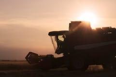 Giacimento di grano in lampadina con una mietitrebbiatrice nell'azione Immagini Stock