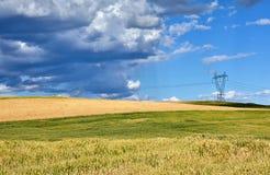 Giacimento di grano in Macedonia immagini stock libere da diritti