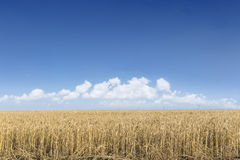 Giacimento di grano nell'ambito di cloudscape Fotografia Stock Libera da Diritti