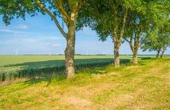 Giacimento di grano in primavera al sole Fotografia Stock Libera da Diritti