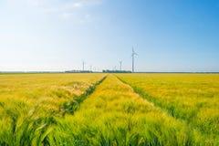 Giacimento di grano in primavera al sole Immagini Stock