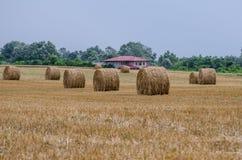 Giacimento di grano raccolto Fotografia Stock
