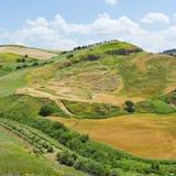 Giacimento di grano raccolto Immagini Stock Libere da Diritti