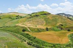 Giacimento di grano raccolto Fotografie Stock