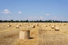 Giacimento di grano di raccolto immagine stock libera da diritti