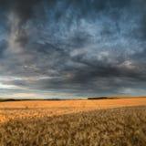 Giacimento di grano sbalorditivo del paesaggio della campagna nel tramonto di estate Immagine Stock Libera da Diritti