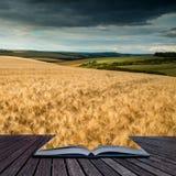 Giacimento di grano sbalorditivo del paesaggio della campagna nel tramonto di estate concentrato Fotografie Stock