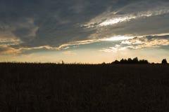 Giacimento di grano su un fondo giallo di tramonto immagine stock libera da diritti