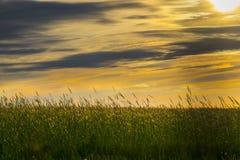 Giacimento di grano su un tramonto immagine stock libera da diritti