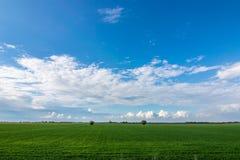 Giacimento di grano sui precedenti delle nuvole Fotografie Stock Libere da Diritti