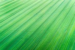 Giacimento di grano verde con la pista concentrare dell'impianto di irrigazione Fotografia Stock Libera da Diritti