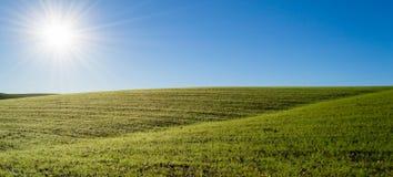 Giacimento di grano verde sotto il sole di mattina Fotografia Stock Libera da Diritti
