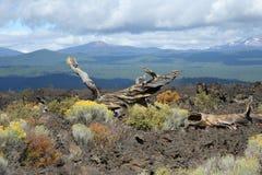 Giacimento di lava del Butte della lava Fotografie Stock Libere da Diritti