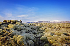 Giacimento di lava dell'Islanda Fotografia Stock Libera da Diritti