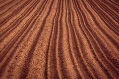 giacimento di recente coltivare della patata Immagini Stock Libere da Diritti