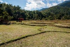 Giacimento dopo il raccolto, l'agricoltura del riso nella collina della montagna della foresta con il cielo nuvoloso Fotografia Stock Libera da Diritti