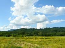 giacimento dorato del riso nella stagione del raccolto Fotografie Stock Libere da Diritti