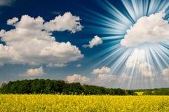 Giacimento dorato del seme di ravizzone e nubi bianche. Immagini Stock