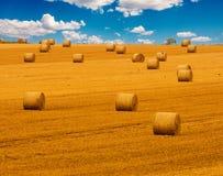 Giacimento dorato della paglia con le balle di fieno e un bello cielo nuvoloso blu Prato del raccolto nei colori gialli dorati Immagini Stock