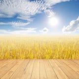 Giacimento e cielo blu di legno del riso di giallo del pavimento per fondo Immagini Stock