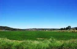 Giacimento e cielo blu verdi del riso al Portogallo Immagini Stock Libere da Diritti
