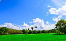 Giacimento e cielo del riso fotografia stock