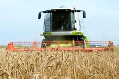 Giacimento e combine dei cereali a fotografia stock libera da diritti