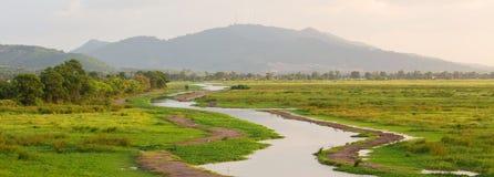 Giacimento e fiume verdi del riso Fotografie Stock Libere da Diritti
