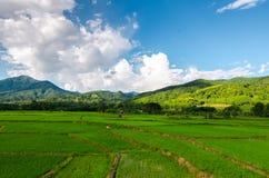 Giacimento e montagna verdi del riso nella provincia di Nan Fotografia Stock Libera da Diritti
