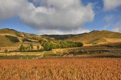 Giacimento e montagne di grano Immagine Stock Libera da Diritti