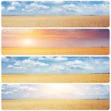 Giacimento e sole di grano creativi del collage Effetto del tonico di Instagram Fotografie Stock Libere da Diritti