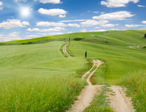 Giacimento e strada della primavera Immagine Stock