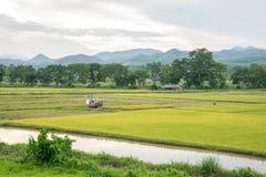 Giacimento ed agricoltura del riso Fotografie Stock