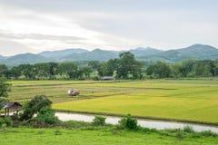 Giacimento ed agricoltura del riso Immagini Stock