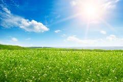 Giacimento ed alba del pisello nel cielo blu Immagine Stock