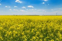 Giacimento giallo della colza vicino a Belgrado Serbia Immagine Stock