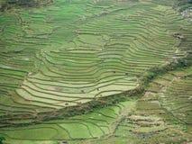 Giacimento incredibile del riso regione del Sa nei mounties di PA/Lao Cai in vietnam del nord, bufalo d'acqua che lavora nel camp Fotografia Stock