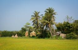 Giacimento nel delta del Mekong, Vietnam del riso Immagini Stock