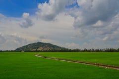 Giacimento nel delta del Mekong, Vietnam del riso Fotografie Stock