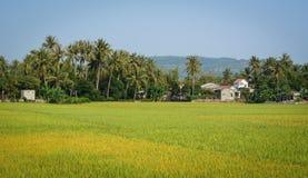 Giacimento nel delta del Mekong, Vietnam del riso Immagine Stock