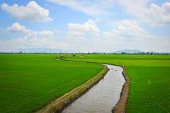Giacimento nel delta del Mekong, Vietnam del sud del riso Fotografia Stock Libera da Diritti