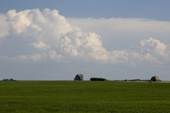 Giacimento Saskatchewan del Canola Immagini Stock