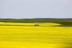 Giacimento Saskatchewan del Canola Immagini Stock Libere da Diritti