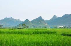 Giacimento scenico cinese del riso nel Guangxi Fotografia Stock