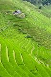 Giacimento a terrazze del riso Fotografie Stock Libere da Diritti