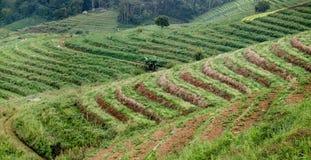 Giacimento a terrazze del riso Immagini Stock