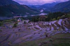 Giacimento a terrazze del riso Immagine Stock Libera da Diritti